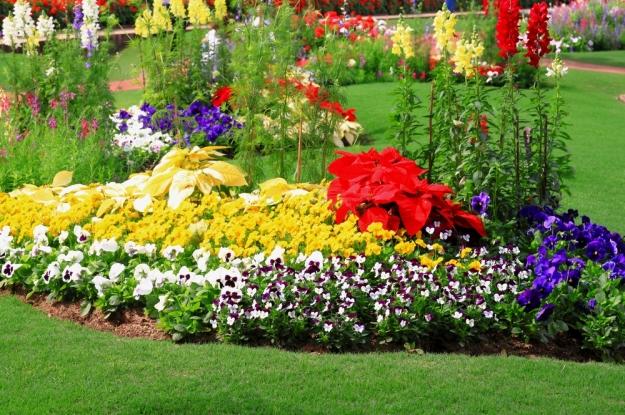 virutalia-renovar-jardin